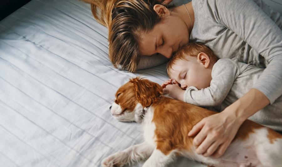 cachorro e um bebê